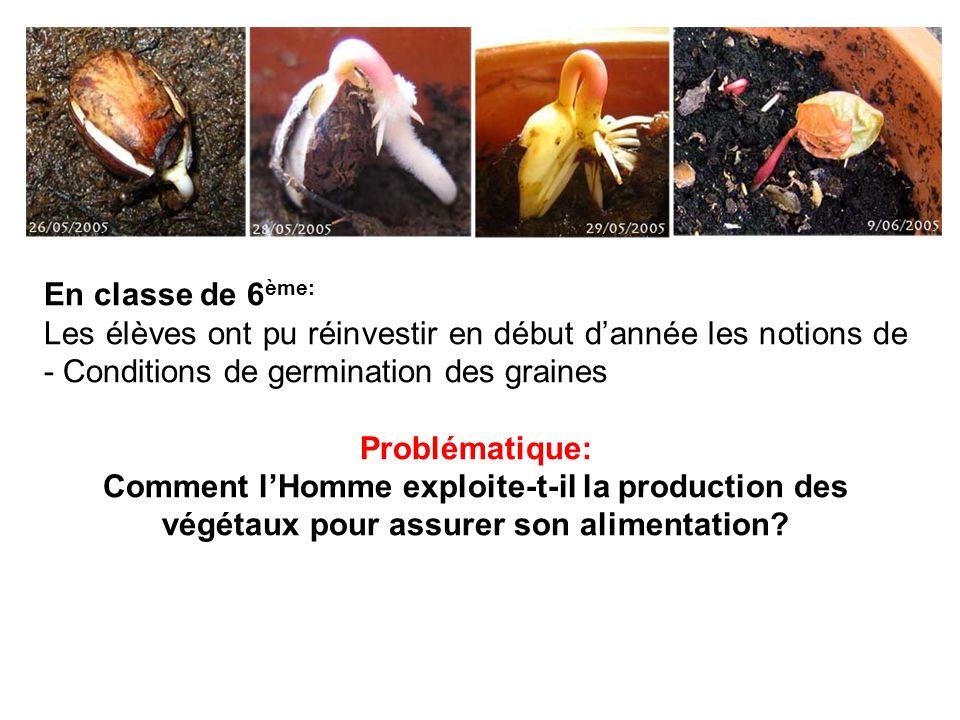 En classe de 6ème: Les élèves ont pu réinvestir en début d'année les notions de - Conditions de germination des graines.