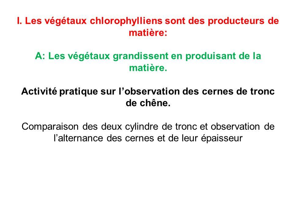I. Les végétaux chlorophylliens sont des producteurs de matière: