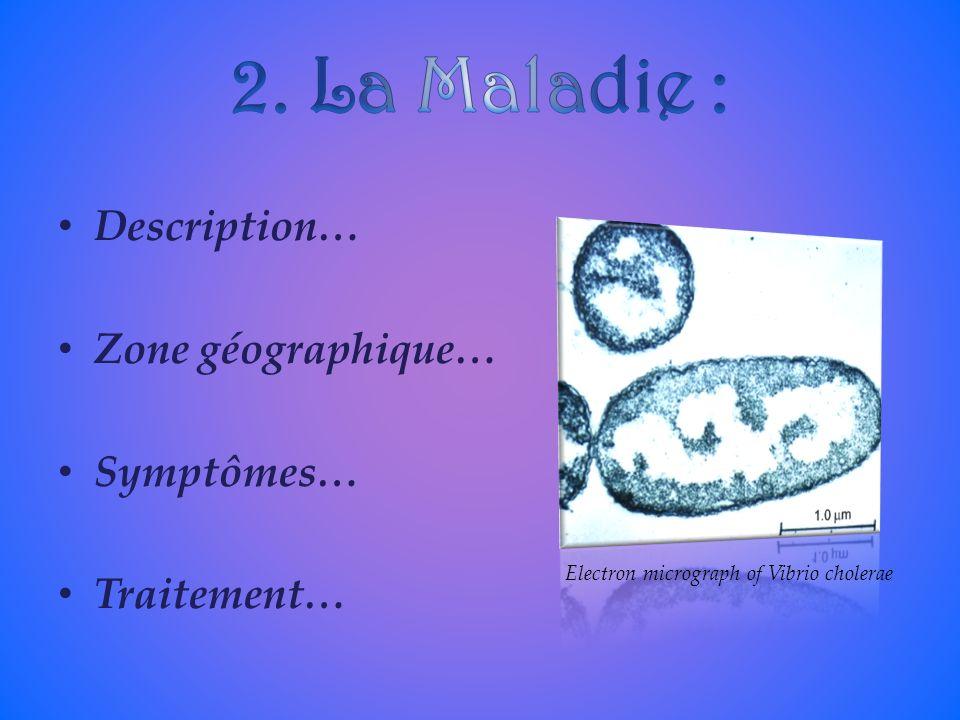 2. La Maladie : Description… Zone géographique… Symptômes… Traitement…