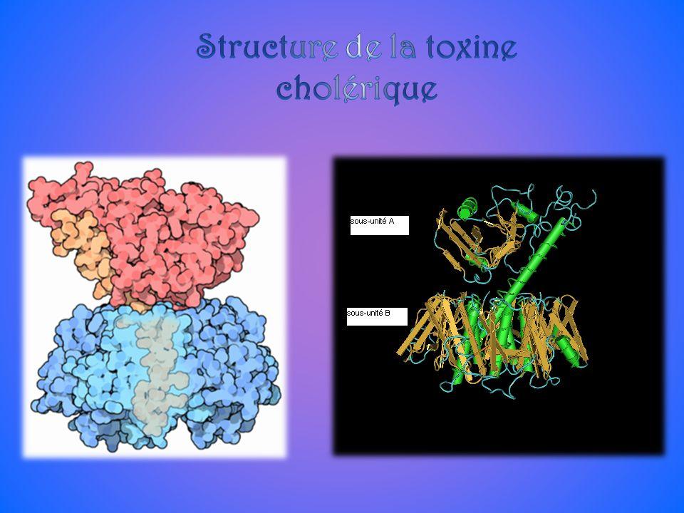 Structure de la toxine cholérique