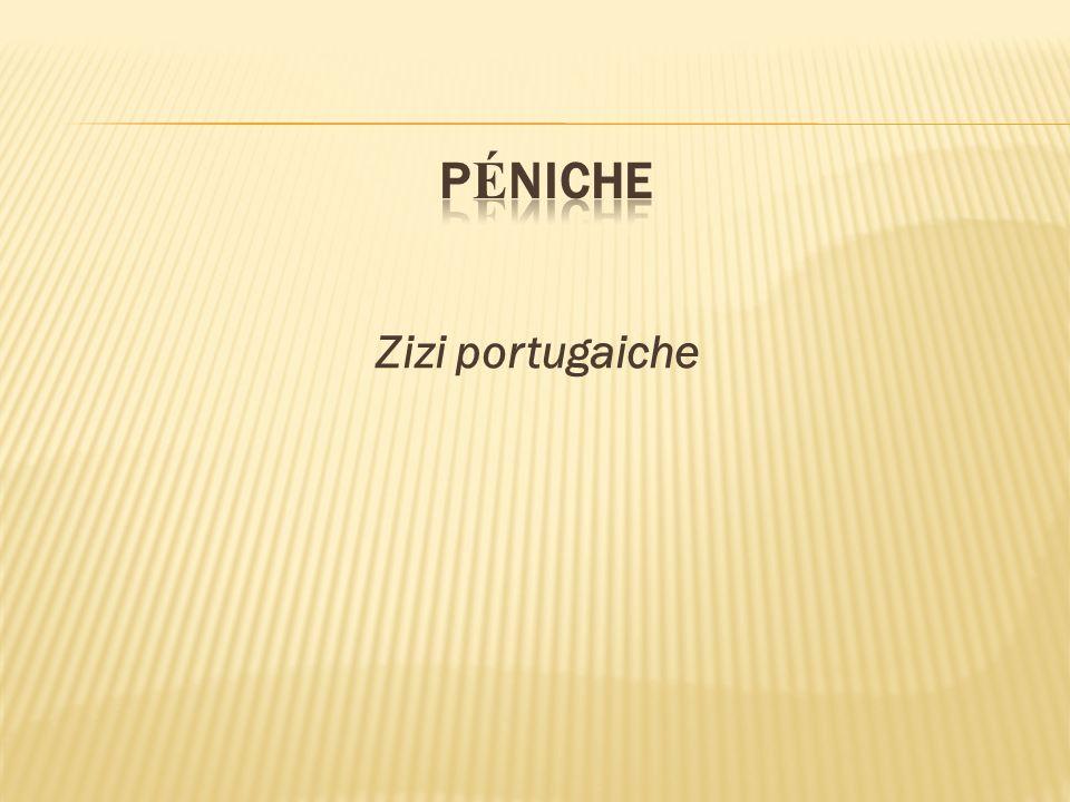 pÉniche Zizi portugaiche