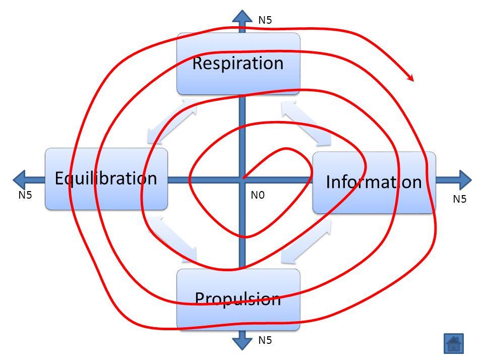 N5 Respiration Information Propulsion Equilibration N5 N0 N5 N5