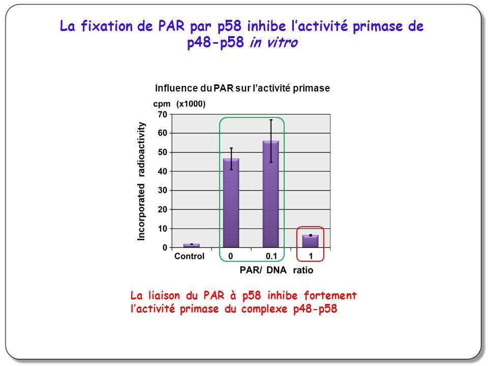 La fixation de PAR par p58 inhibe l'activité primase de p48-p58 in vitro