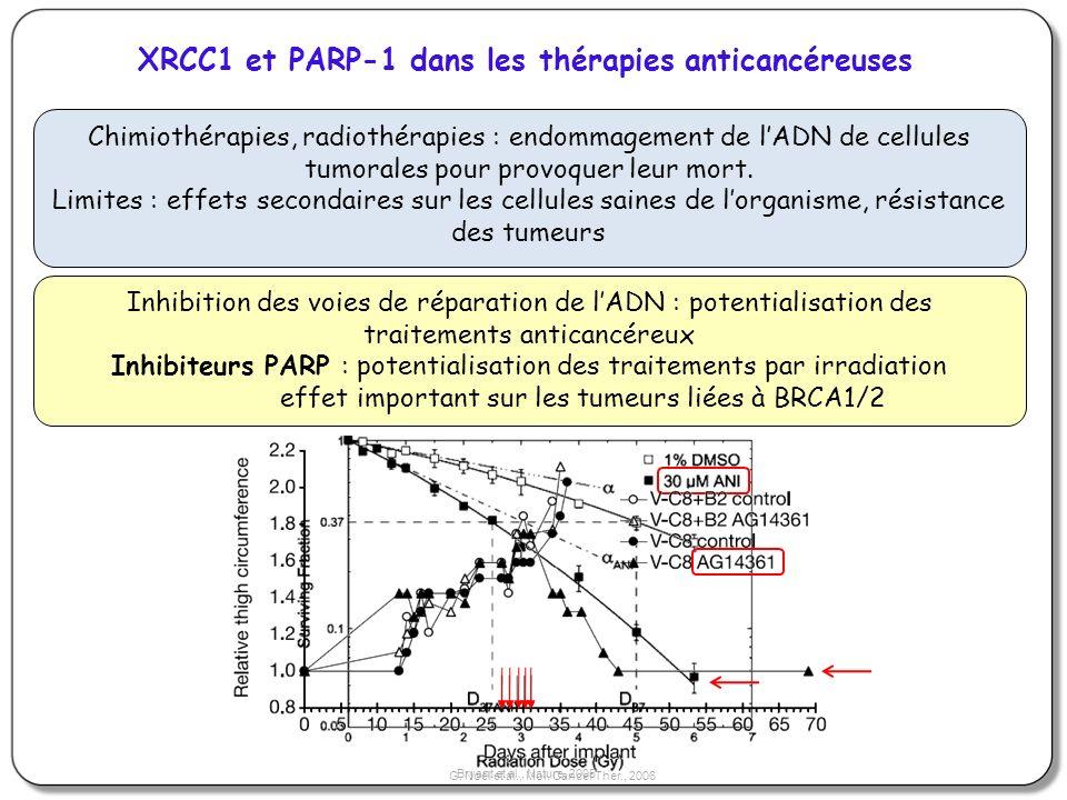 XRCC1 et PARP-1 dans les thérapies anticancéreuses