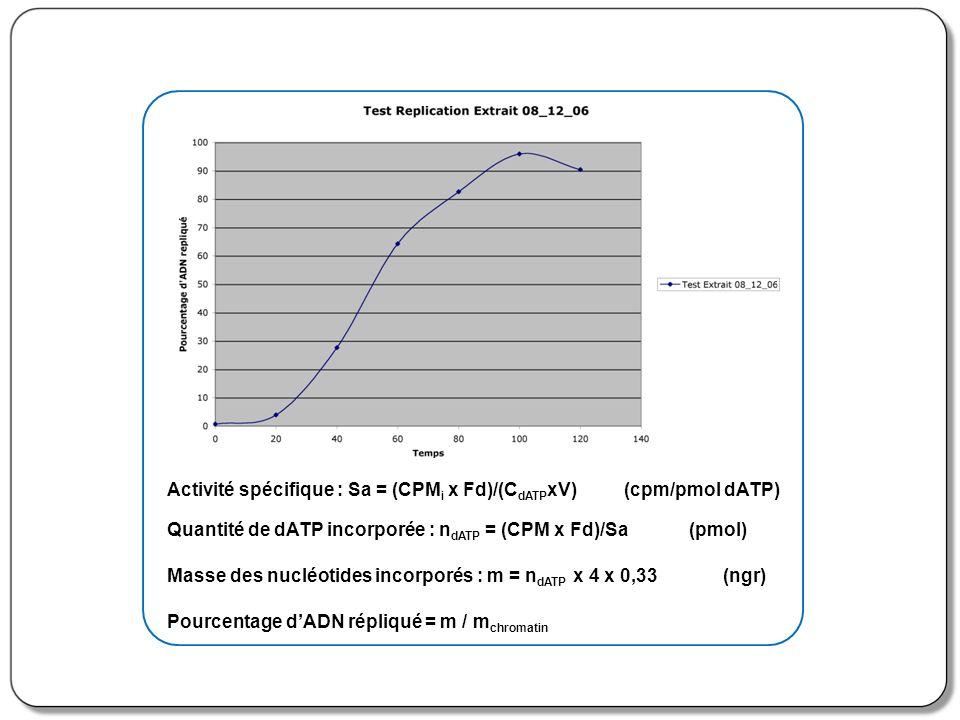 Activité spécifique : Sa = (CPMi x Fd)/(CdATPxV) (cpm/pmol dATP)