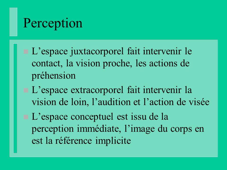 Perception L'espace juxtacorporel fait intervenir le contact, la vision proche, les actions de préhension.