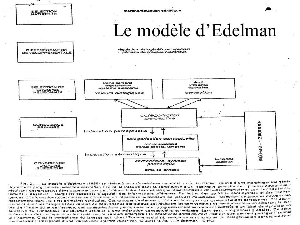 Le modèle d'Edelman