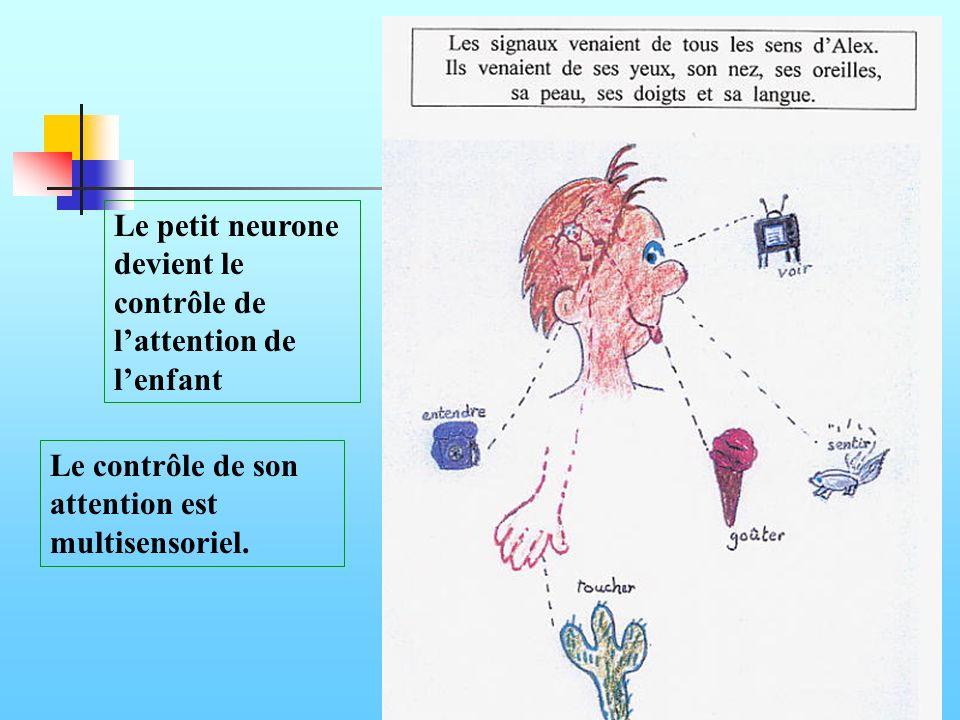 Le petit neurone devient le contrôle de l'attention de l'enfant