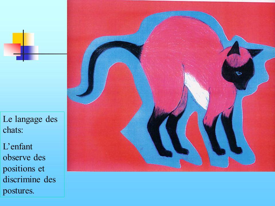 Le langage des chats: L'enfant observe des positions et discrimine des postures.