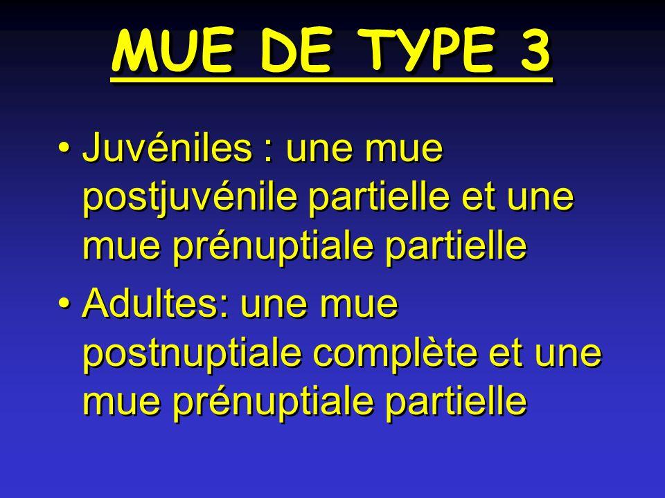 MUE DE TYPE 3 Juvéniles : une mue postjuvénile partielle et une mue prénuptiale partielle.
