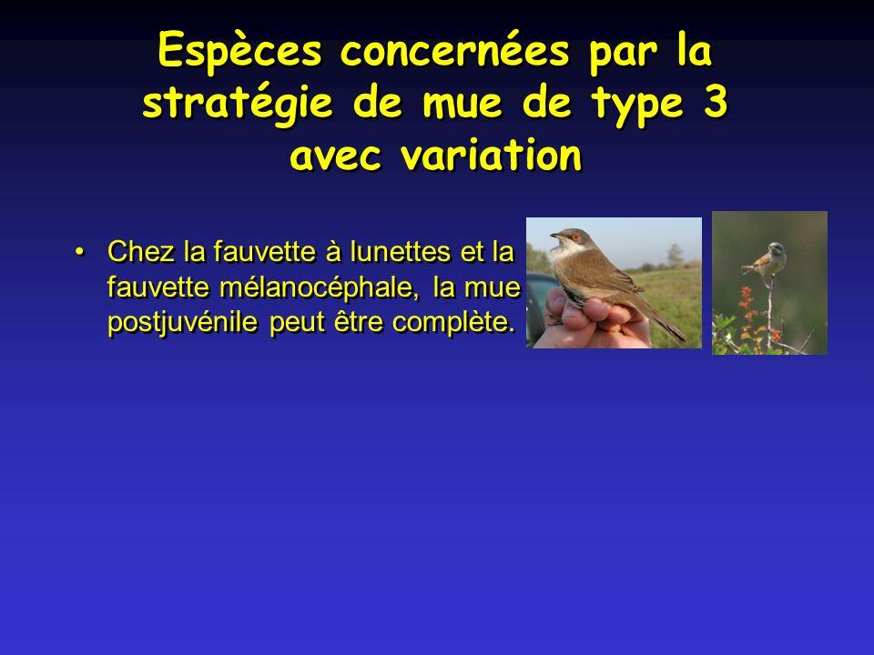 Espèces concernées par la stratégie de mue de type 3 avec variation