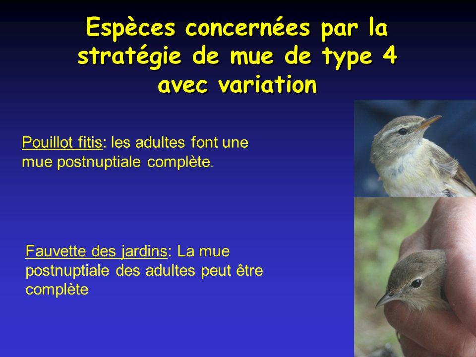 Espèces concernées par la stratégie de mue de type 4 avec variation