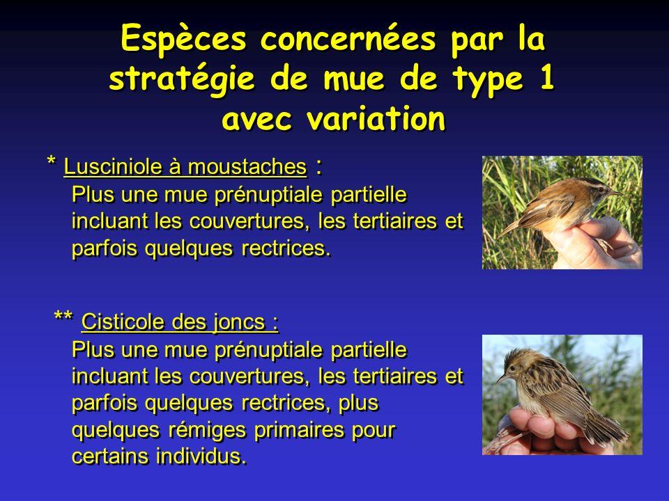 Espèces concernées par la stratégie de mue de type 1 avec variation