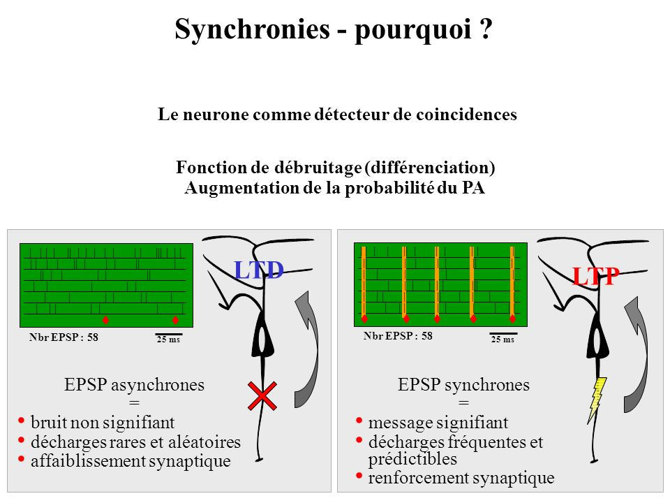 Synchronies - pourquoi