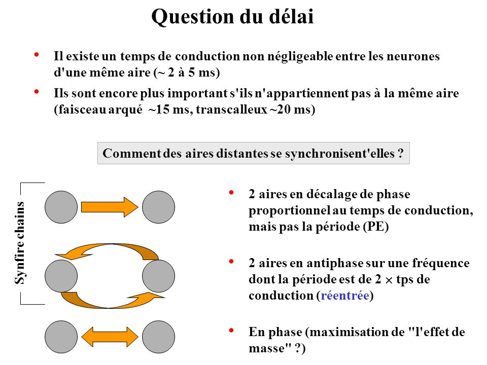 Question du délai Il existe un temps de conduction non négligeable entre les neurones d une même aire (~ 2 à 5 ms)