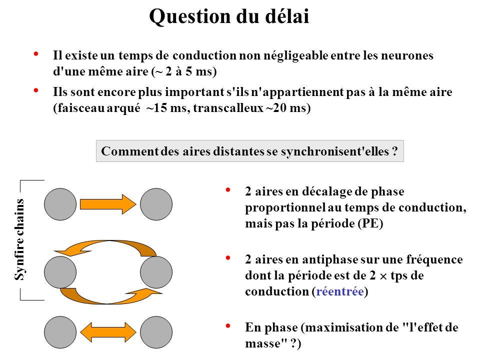 Question du délai Il existe un temps de conduction non négligeable entre les neurones d une même aire (~ 2 à 5 ms)