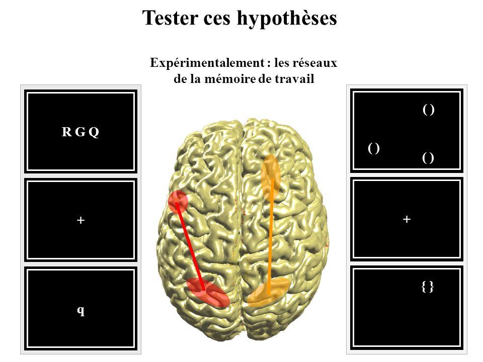 Expérimentalement : les réseaux de la mémoire de travail
