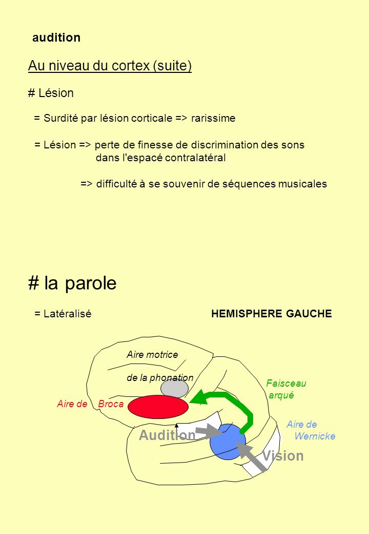 # la parole Au niveau du cortex (suite) Audition Vision audition
