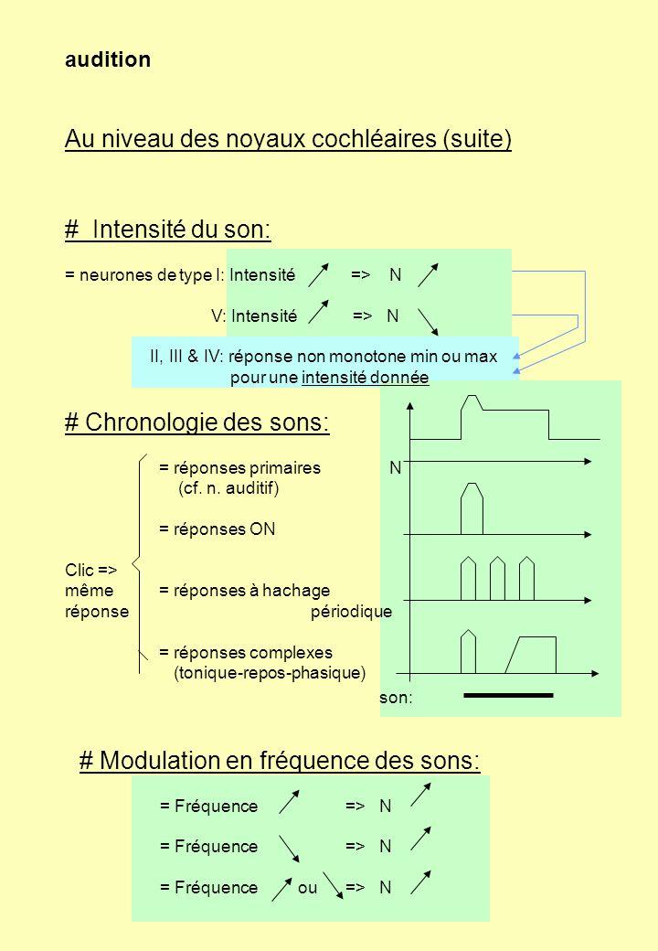 Au niveau des noyaux cochléaires (suite)