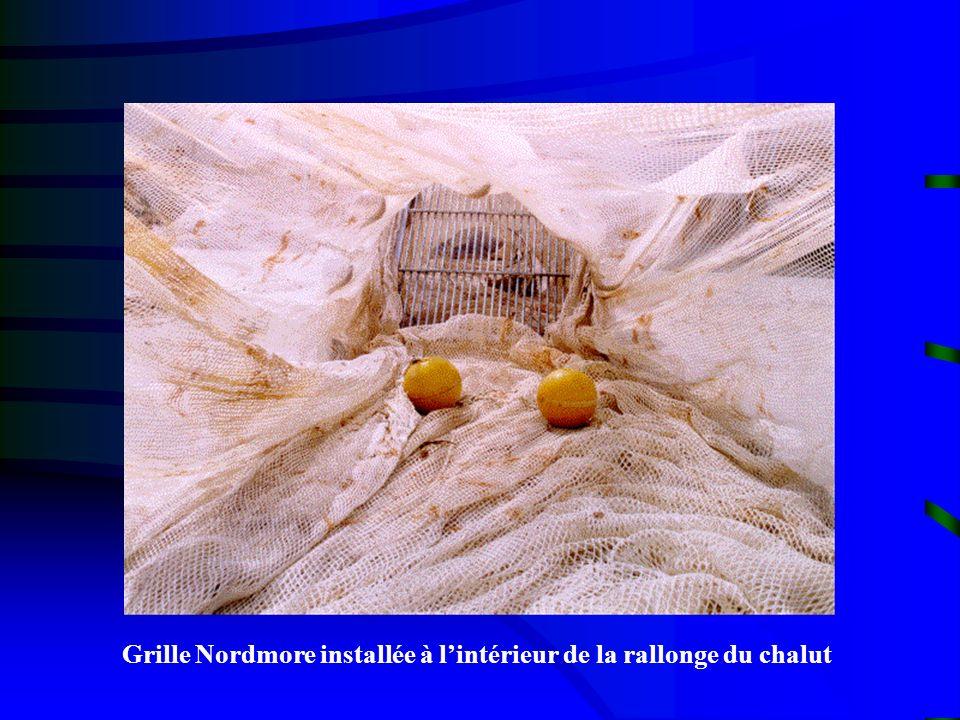 Grille Nordmore installée à l'intérieur de la rallonge du chalut