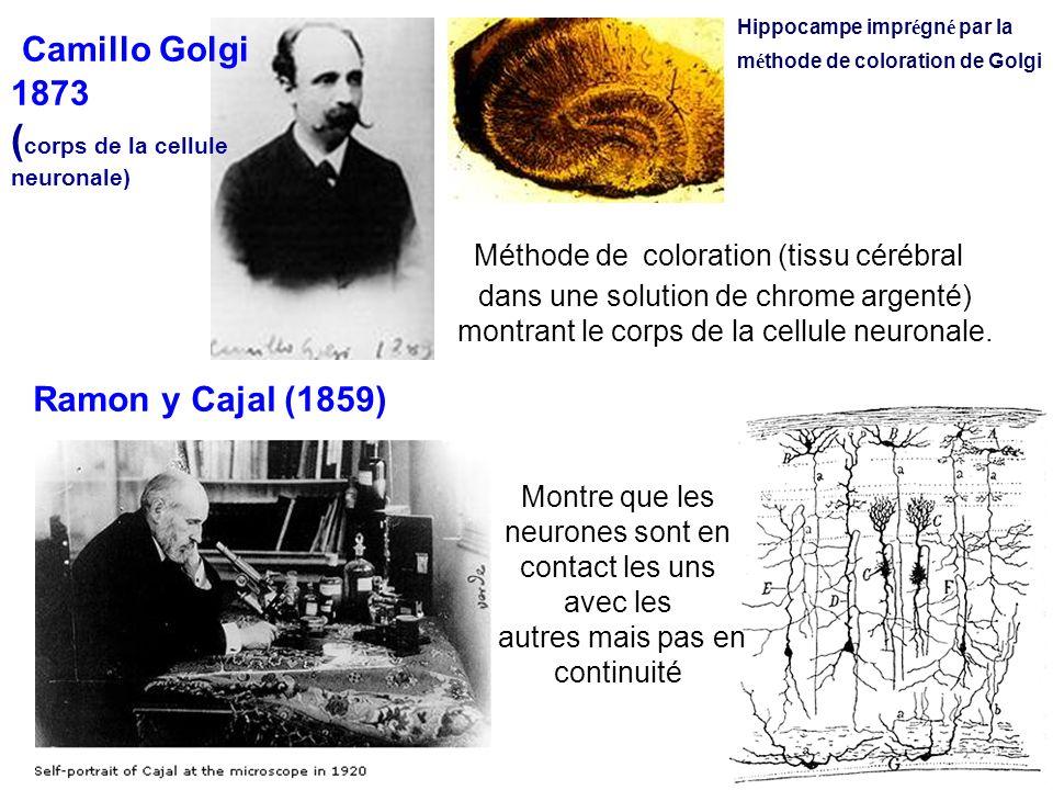 Camillo Golgi (corps de la cellule Ramon y Cajal (1859) 1873