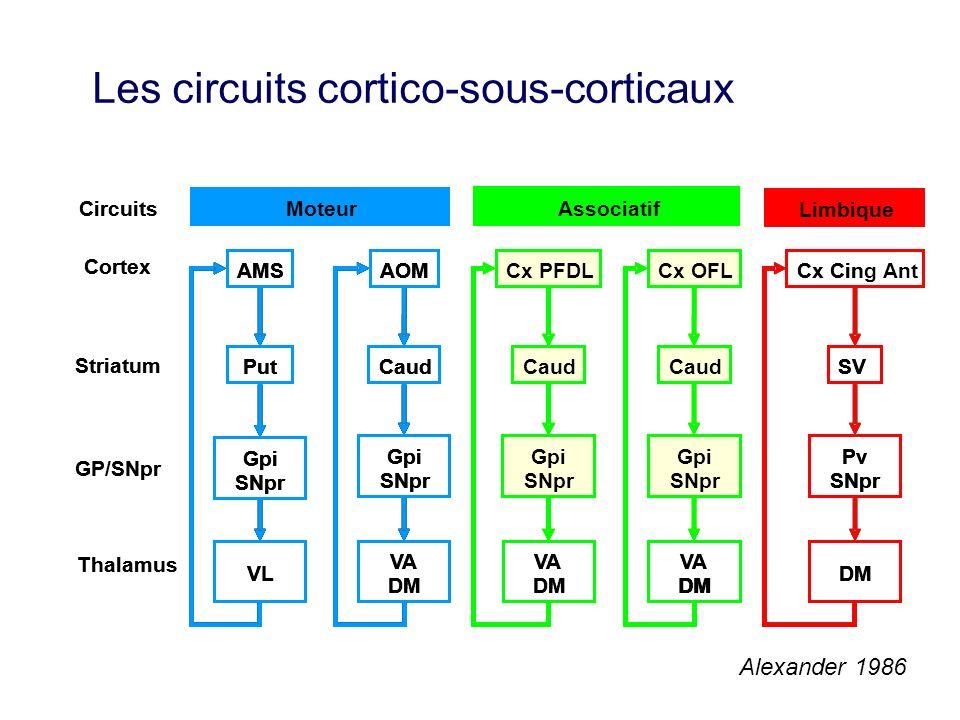Les circuits cortico-sous-corticaux