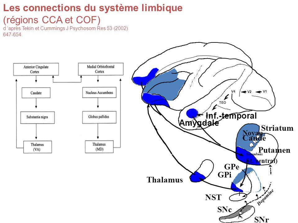 Les connections du système limbique (régions CCA et COF)