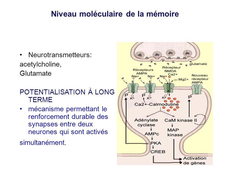 Niveau moléculaire de la mémoire