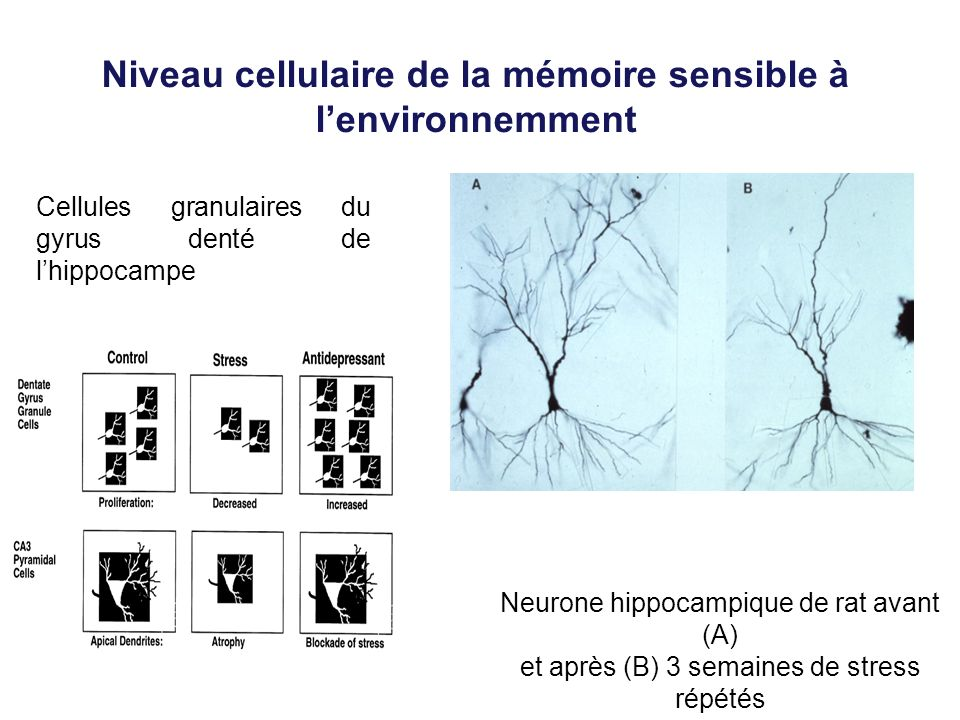 Niveau cellulaire de la mémoire sensible à l'environnemment