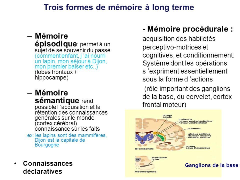 Trois formes de mémoire à long terme
