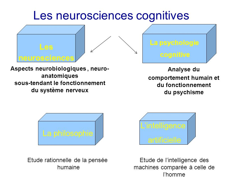 Les neurosciences cognitives