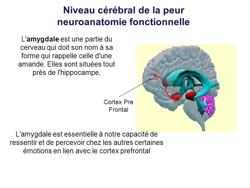 Niveau cérébral de la peur neuroanatomie fonctionnelle