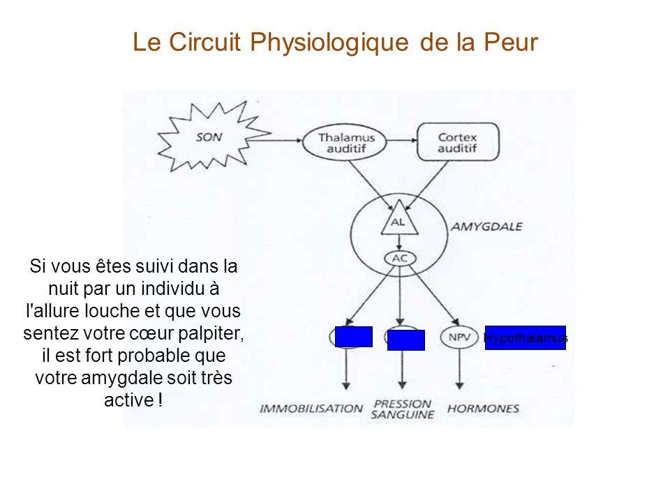Le Circuit Physiologique de la Peur