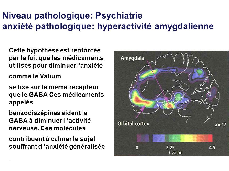 Niveau pathologique: Psychiatrie anxiété pathologique: hyperactivité amygdalienne