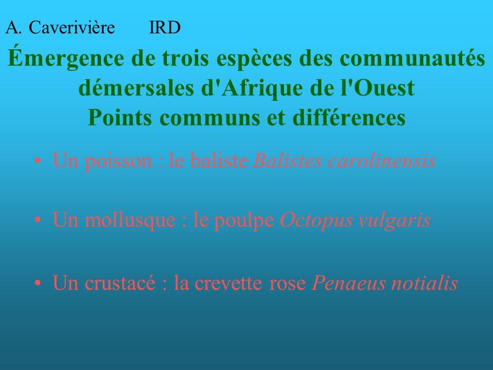 A. Caverivière IRD. Émergence de trois espèces des communautés démersales d Afrique de l Ouest Points communs et différences.