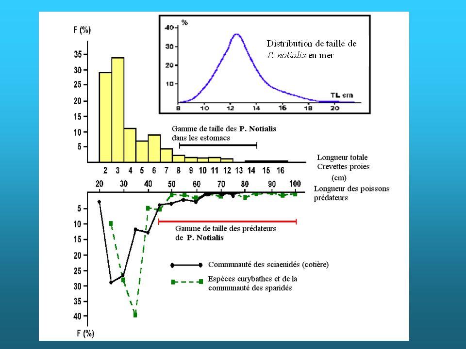 Les contenus stomacaux de 2 657 poissons de plus de 20 cm de LT ont été analysés par Rabarison Andriamirado (1986) au Sénégal. Ces poissons appartiennent à 32 espèces différentes et proviennent des lieux de pêche à la crevette rose, ils sont considérés comme des prédateurs potentiels de cette dernière. Si 3 403 crevettes ont été trouvées, un groupe de proies prédominant, seuls 27 restes de crevette rose en faisaient partie. C est la petite crevette Parapenaeopsis atlantica qui dominait. Les crevettes roses ingérées étaient des immatures récemment arrivées des nurseries en estuaires. Les prédateurs étaient de grands individus de 9 espèces, dont 5 sélaciens. Seule une espèce abondante sur les fonds à crevette était un prédateur, mais, les grands individus pouvant capturer la crevette rose ne représentent pas 4% captures. Les graphiques représentent la distribution de fréquence de toutes les crevettes-proies, avec la gamme de taille des crevettes roses trouvées dans les estomacs et la distribution des crevettes roses capturées sur les fonds de pêche. Il y a également les distributions de fréquence, regroupées en fonction des communautés d appartenance, des principales espèces prédatrices de crevettes sur les fonds de pêche à crevette rose, ainsi que la gamme de taille permettant la prédation sur cette dernière. Les crevettes roses ingérées sont en bout de distribution des crevettes-proies et en première partie de la distribution des crevettes roses capturées par les chalutiers, et seuls des prédateurs de grande taille, dont l abondance est faible, peuvent en consommer.