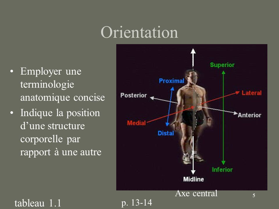 Orientation Employer une terminologie anatomique concise