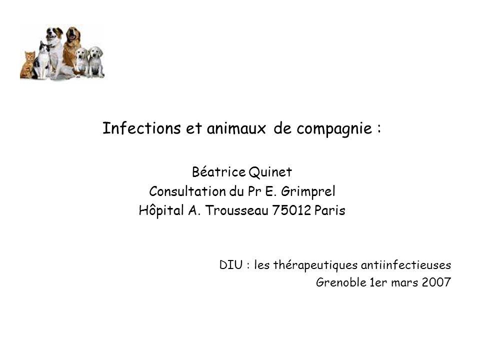 Infections et animaux de compagnie :