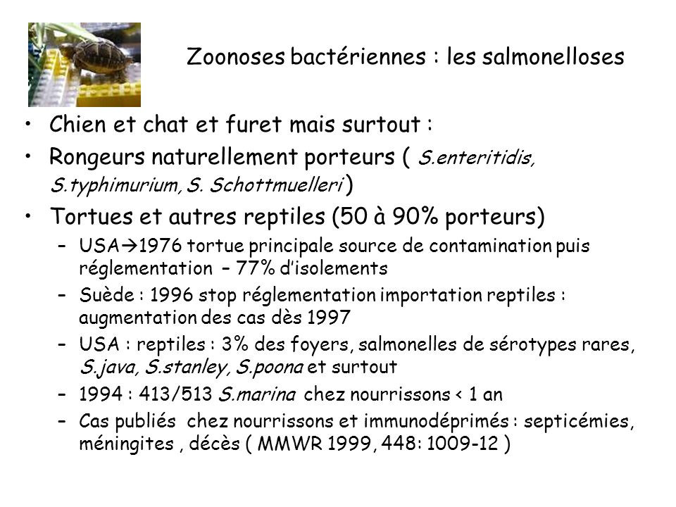 Zoonoses bactériennes : les salmonelloses