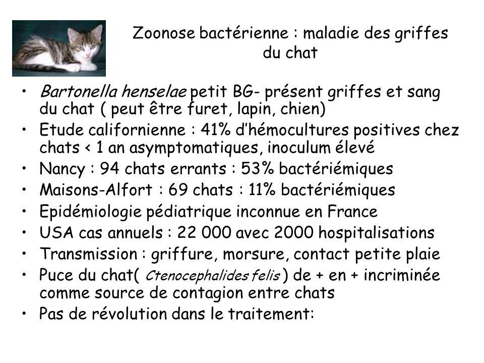 Zoonose bactérienne : maladie des griffes du chat