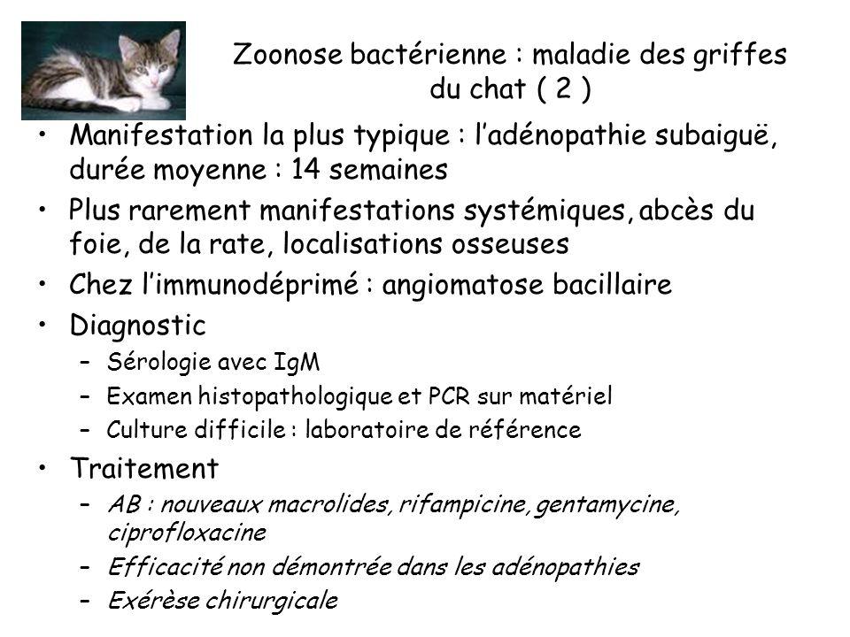 Zoonose bactérienne : maladie des griffes du chat ( 2 )