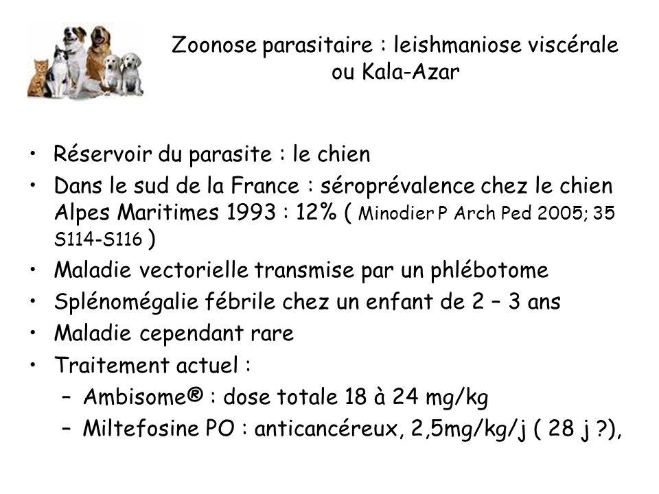 Zoonose parasitaire : leishmaniose viscérale ou Kala-Azar