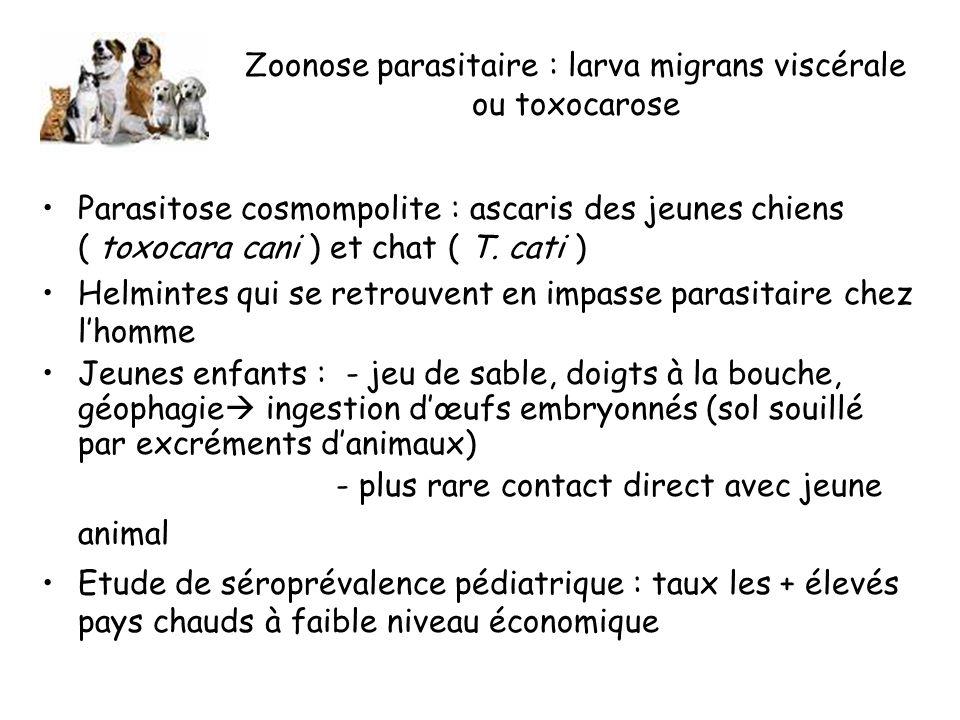 Zoonose parasitaire : larva migrans viscérale ou toxocarose