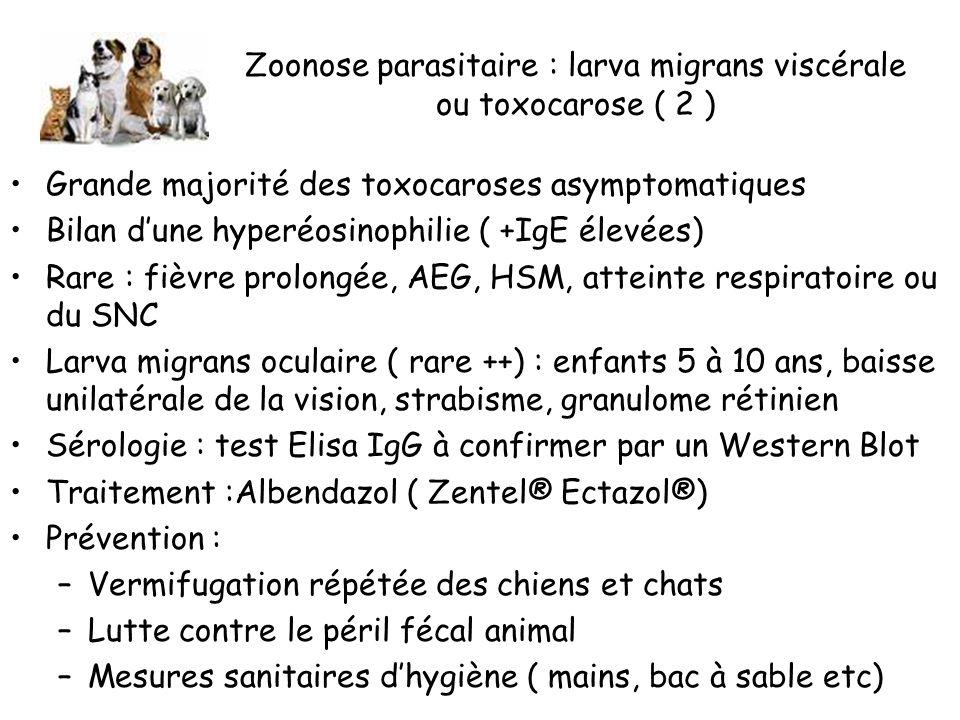 Zoonose parasitaire : larva migrans viscérale ou toxocarose ( 2 )