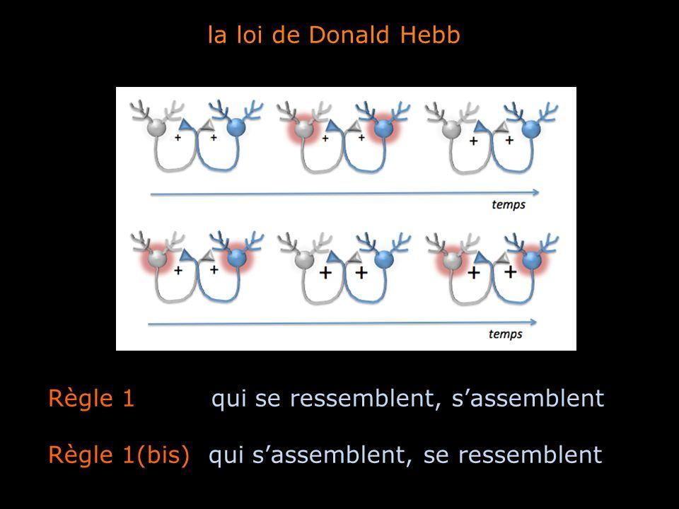 la loi de Donald Hebb Règle 1 qui se ressemblent, s'assemblent.
