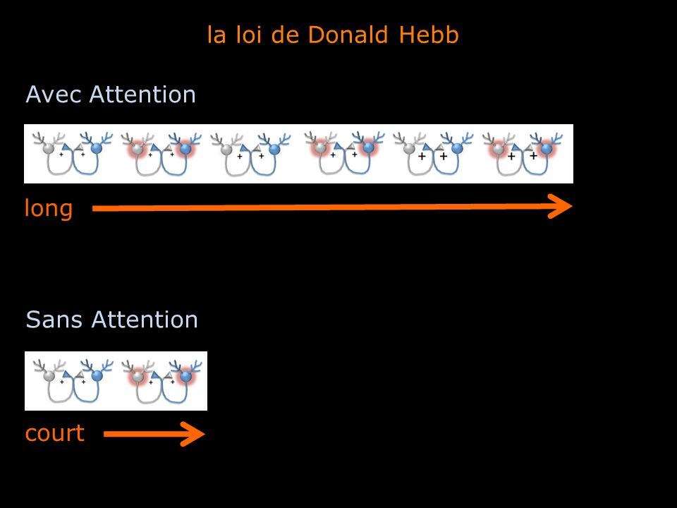 la loi de Donald Hebb Avec Attention long Sans Attention court