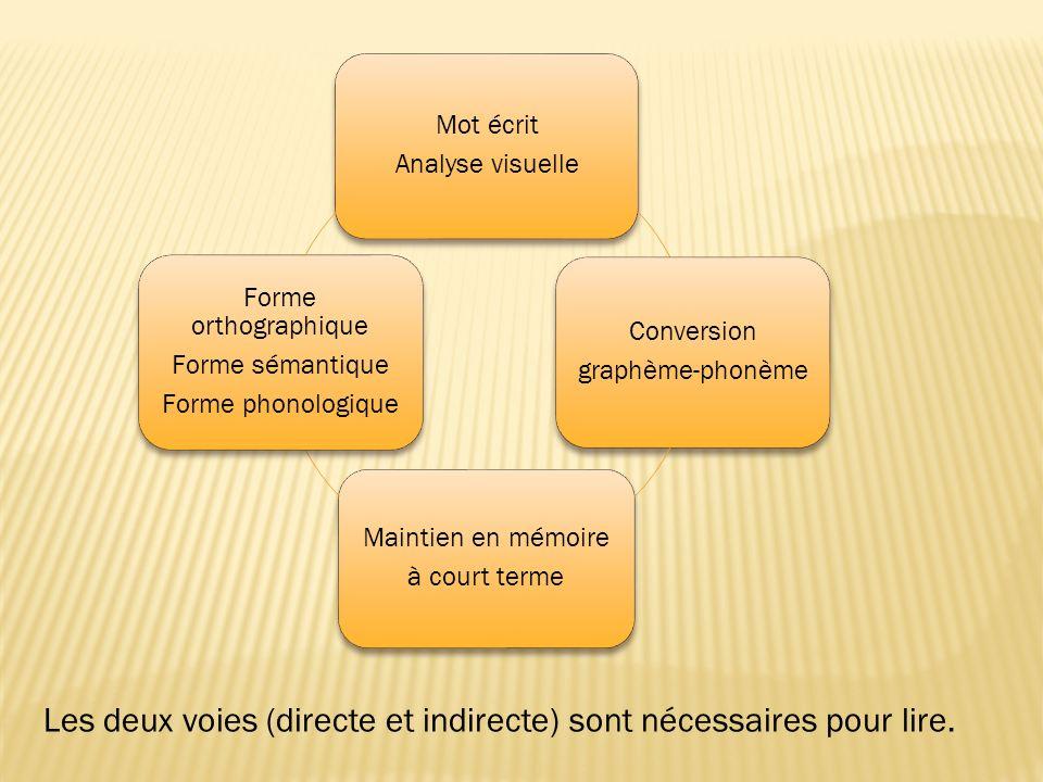 Les deux voies (directe et indirecte) sont nécessaires pour lire.