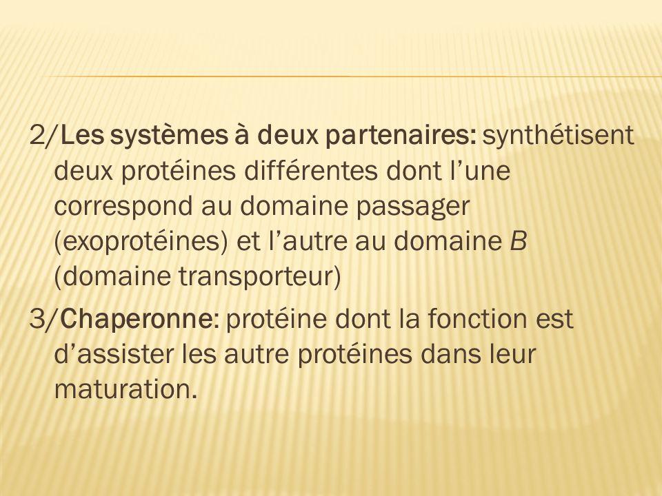 2/Les systèmes à deux partenaires: synthétisent deux protéines différentes dont l'une correspond au domaine passager (exoprotéines) et l'autre au domaine Β (domaine transporteur) 3/Chaperonne: protéine dont la fonction est d'assister les autre protéines dans leur maturation.