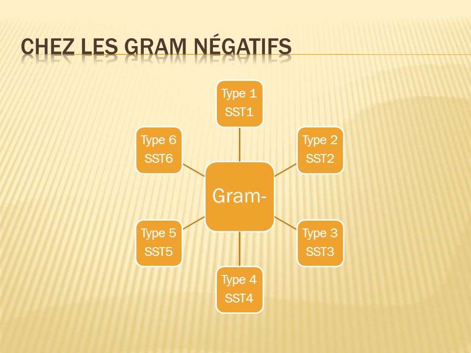 Chez les gram négatifs Gram- Type 1 SST1 Type 2 SST2 Type 3 SST3