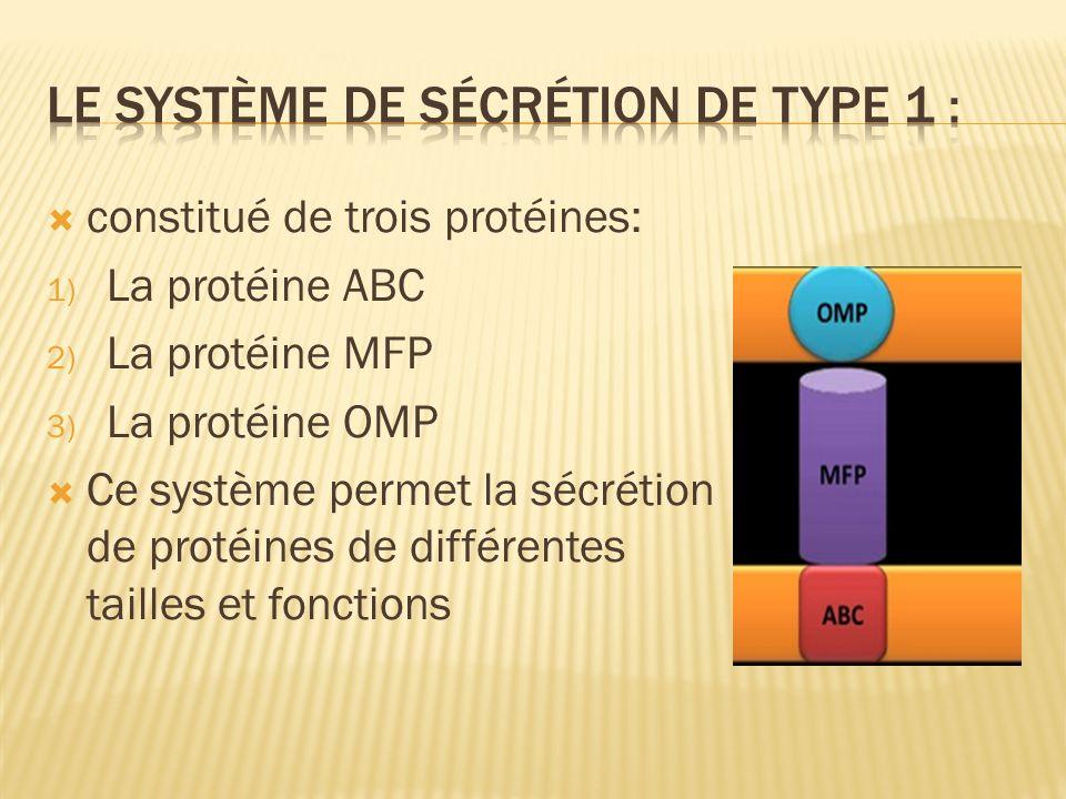 Le système de sécrétion de type 1 :